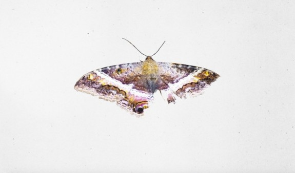 kendrick-lamar-to-pimp-a-butterfly-musicians-main-715x420